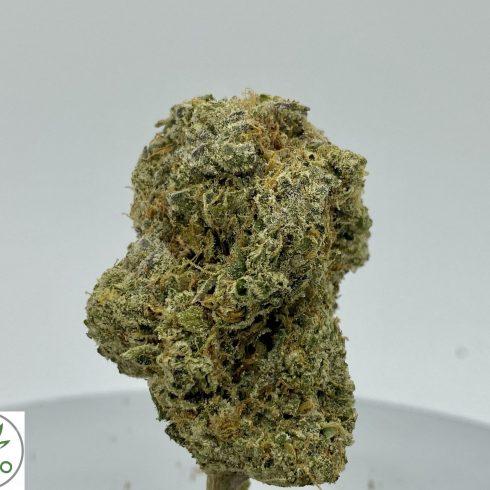 Green Crack Hybrid Sativa