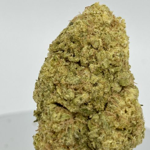 Cherry Glue Hybrid Sativa