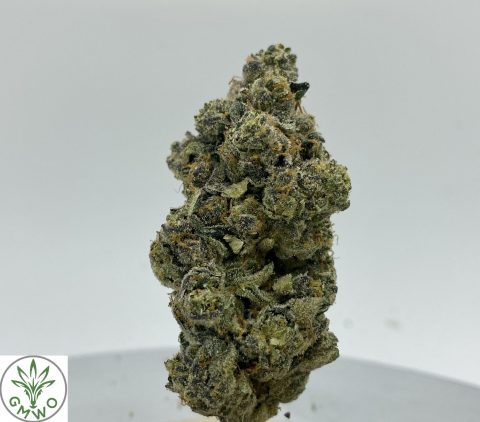 Face Off Hybrid Indica