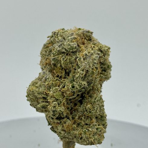 Jungle Diamonds BEST SATIVA XL BUD