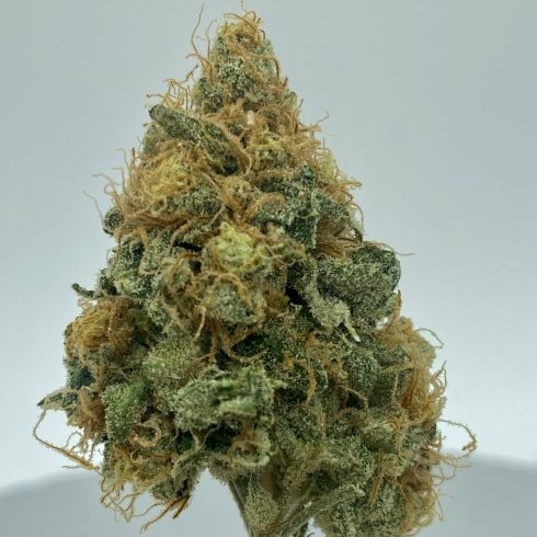KING TUT BEST SATIVA