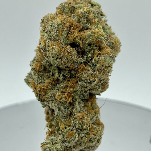 Nuclear Cookies BEST SATIVA