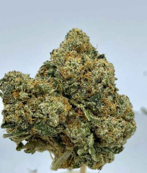 Cracker Jack Sativa Dominant