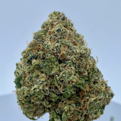 Fatso Hybrid Sativa