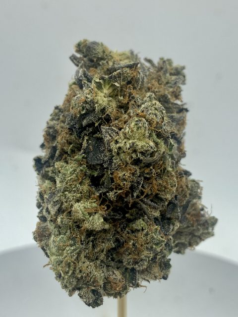 Brownie Scout Indica