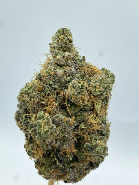 King Louis XIII Indica gas
